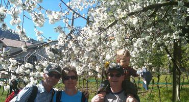 Blütezeit im Meraner Land