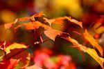 Das Gold des Herbstes