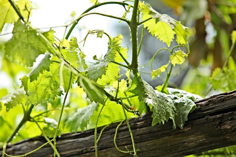 Exklusive Weinreise nach Meran