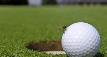 Golfen & Gourmet