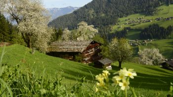 Once upon a time in the Alpbach Valley | Season A