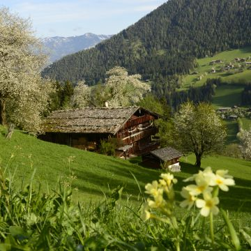 Once upon a time in the Alpbach Valley