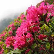Almrosenblütenmeer - Frieden einatmen | 7 Übernachtungen