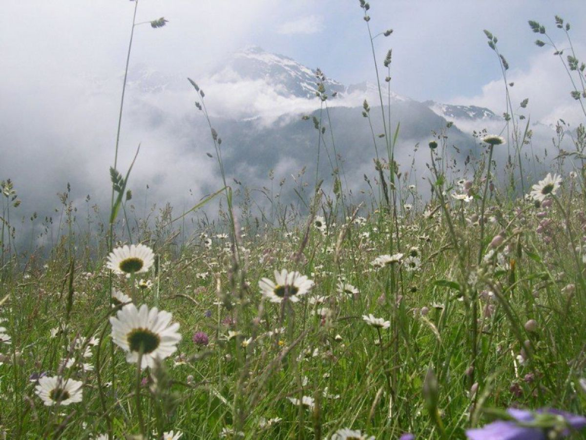 HIGHLIGHTS der ALPENFLORA