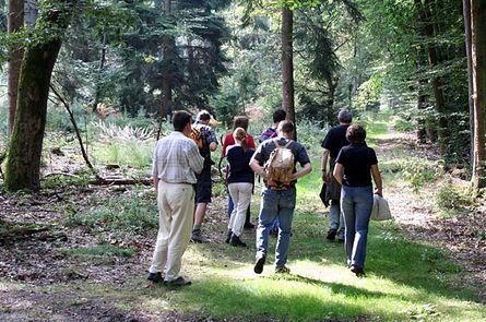 Wanderungen durch Zeit und Raum - Naturphänomene und Kulturspuren im Wald und an der Elbe