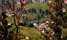 Frühlingserwachen im Schwarzwald