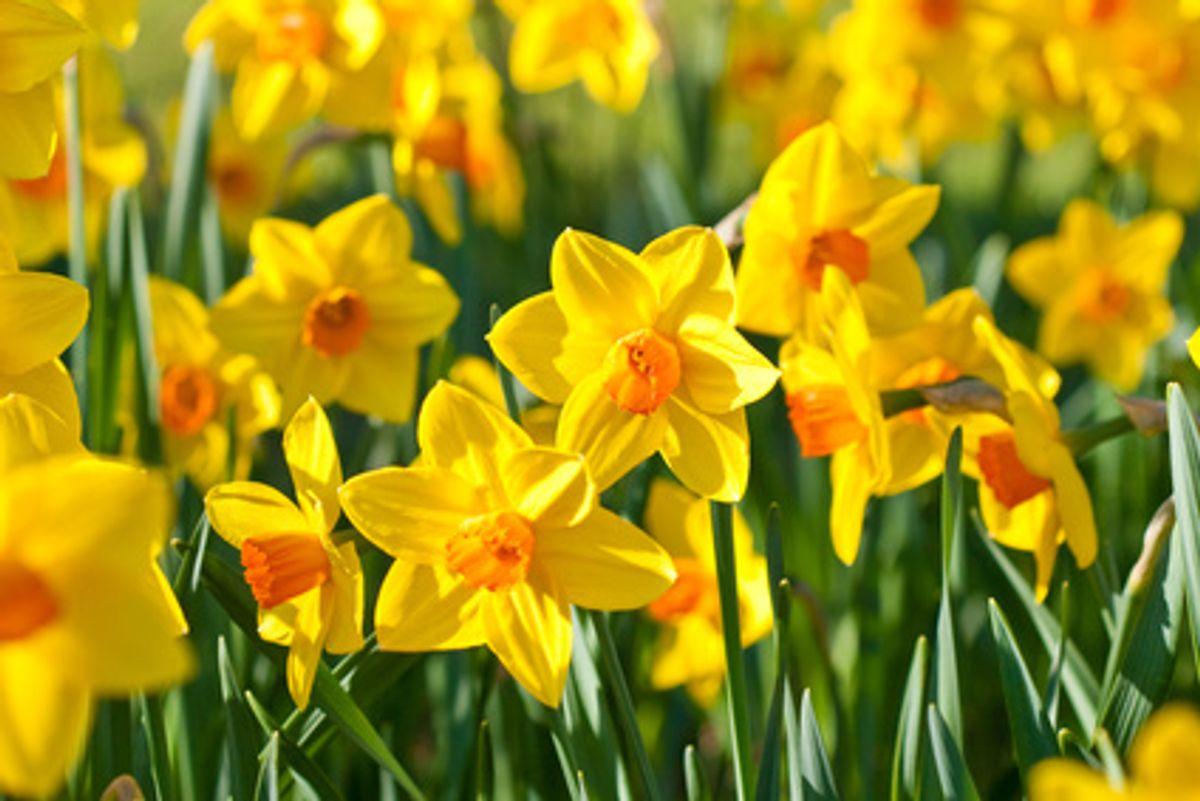 Frühlingsfasten