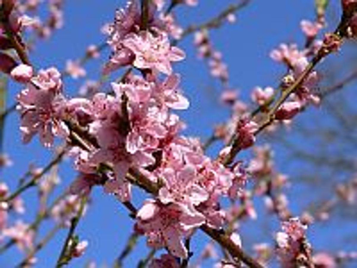 Frühling auf dem Darß