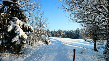 Schneebedeckte Bäume im Schwarzwald im Winter