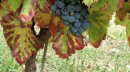 Kulinarische Weinreise