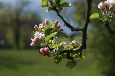 Frühlingserwachen am Faakersee