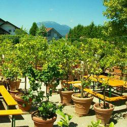 Der Zitrusgarten