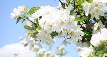 Sogni di primavera