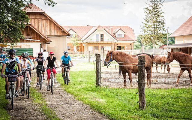 Neugierige Trnulja Pferde
