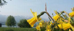 Frühlingserwachen am Faaker See - für Ihre Familie